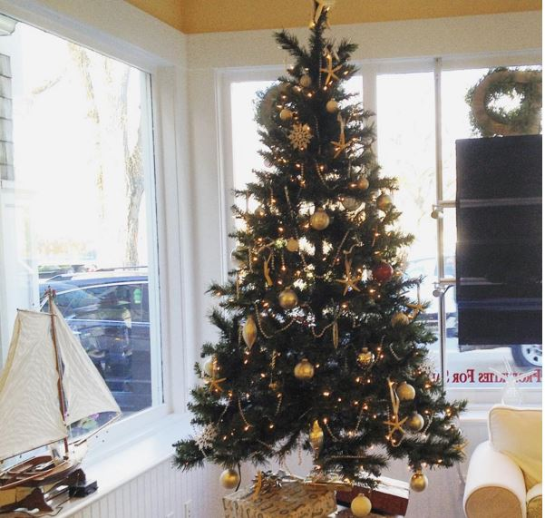 buy local where to find eco friendly christmas trees on cape cod - Christmas Tree Buy